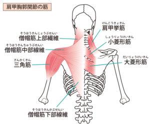 痛み 右 背中 右背中の痛み!男性の場合考えられる原因とその理由
