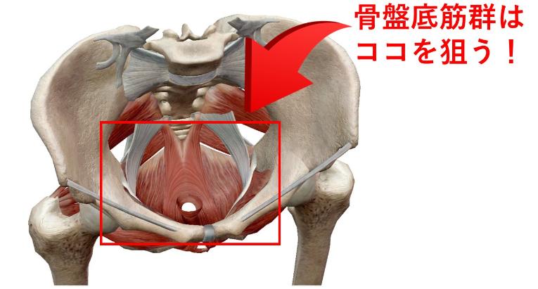産後にオススメ!骨盤底筋群のトレーニング・エクササイズ