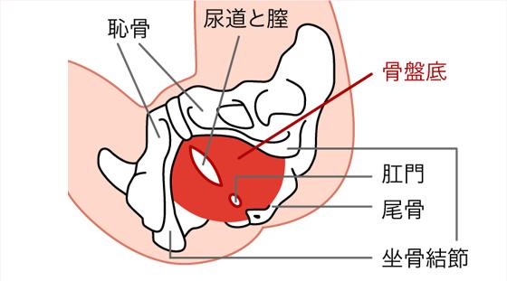 排尿時のトレーニング